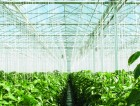 Greenhouse agri food industrial
