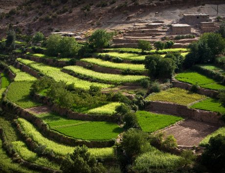 Rice Field Culitivation Morocco