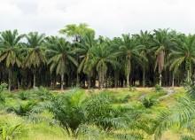 palm-oil-plantation_news
