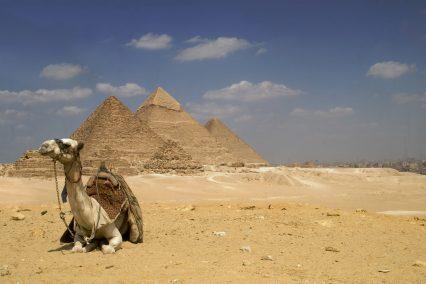 Pyramid camel Egypt Cairo