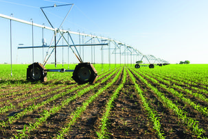 Africa-agriculture-feild