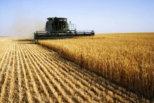 Combine harvester crop agriculture