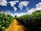 Corn Field World Cloud