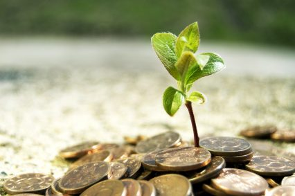 Growing Money Plant Finance Investment