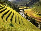Rice field river Vietnam