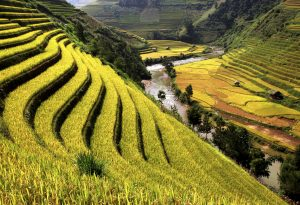 Rice field river Vietnam