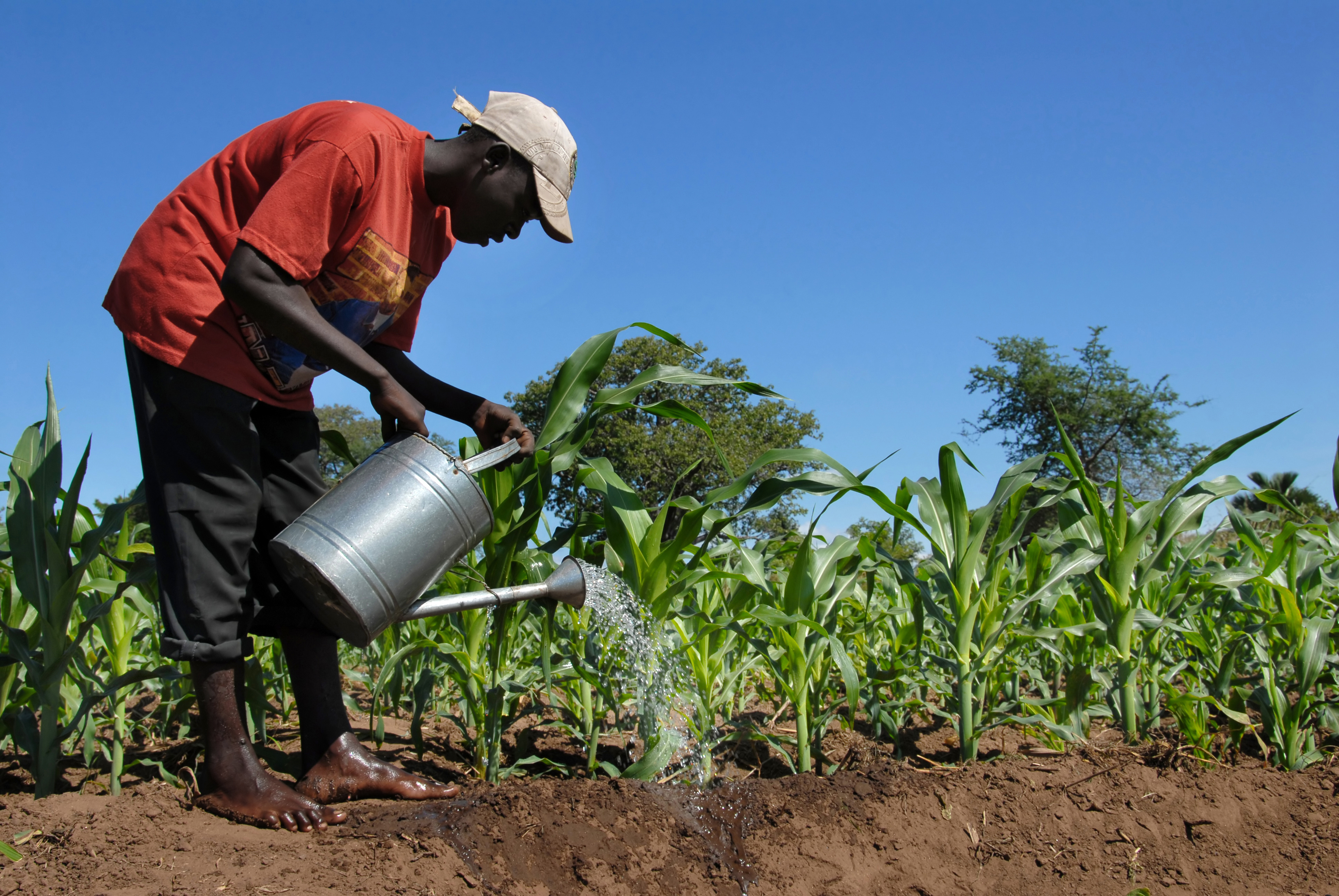 market failure in agriculture Explaining the failure of agricultural production in sub-saharan africa agriculture is an important sector for sustaining growth and reducing poverty in.