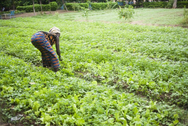 Africa farmer agriculture woman plants