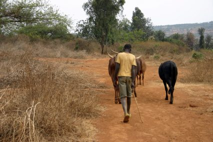 Africa farmer cattle poverty