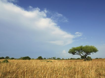 Cameroon Africa plain acacia tree landscape
