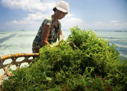 Indonesia seaweed farmer woman water