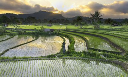 Rice paddy fields Philippines