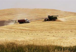 Agribusiness Wheat Harvest Trucks