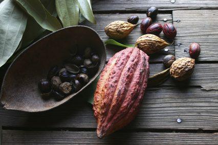 Cocoa Bean Nutmeg