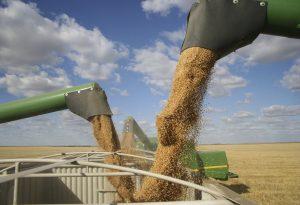Grain Augers Harvest