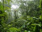 Tropical Rainforest Costa Rica Green