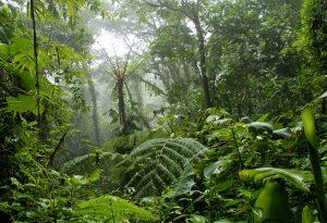 Tropical Rainforest Costa Rica Green