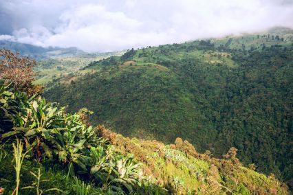 Banana-plantation-Ecuador