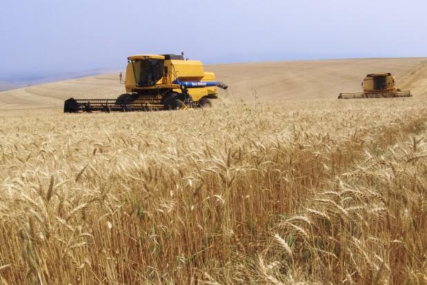 Combine Harvester Wheat Field Brazil webheader