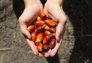 Palm-Oil-Agriculture-Farm-Hands_News
