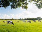 New-Zealand-Dairy_Report