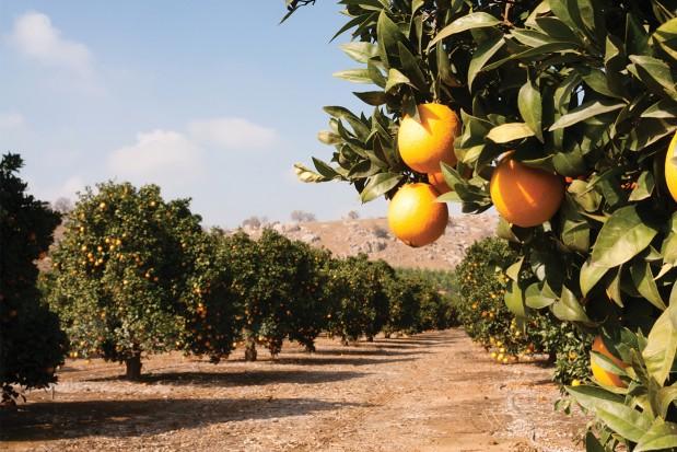 Agribusiness-Americas-report