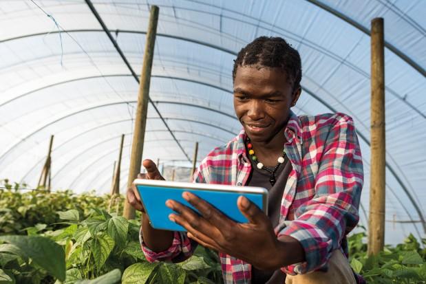 African-Men-Greenhouse-Digital-Tablet_News