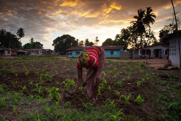 Sierra-Leone-West-Africa-Yongoro_News